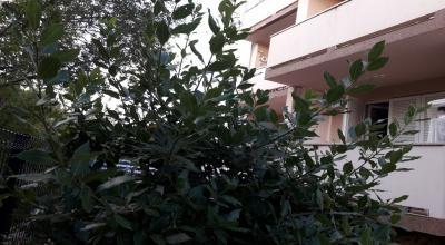 apartmani Otok Krk - mir i zelenilo