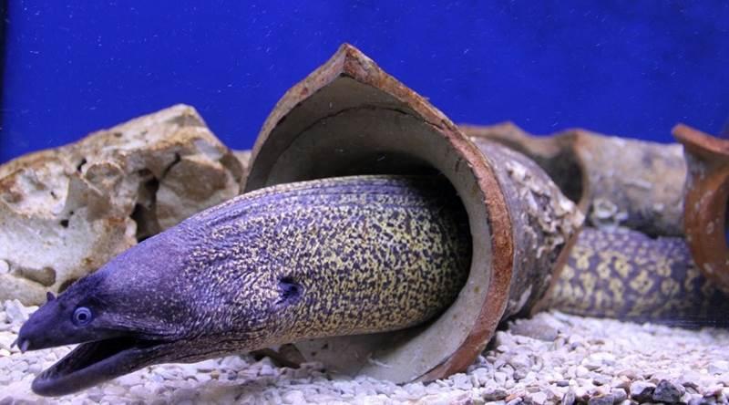 Aquarium Šibenik što vidjeti